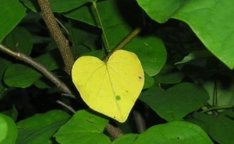 5 Cara Melembutkan Hati