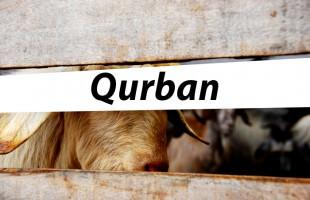 Program Penyelenggaraan Qurban YPIA di Wonosari - Gunungkidul