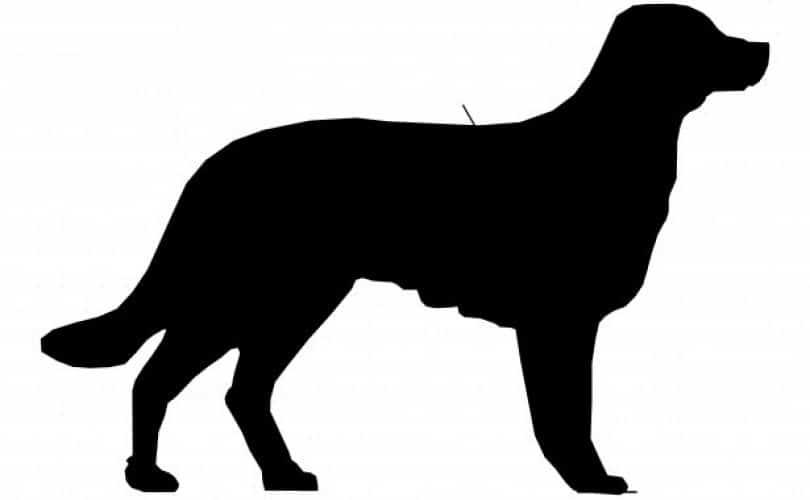 Fatwa Ulama: Hukum Jual-Beli Anjing Dan Kucing