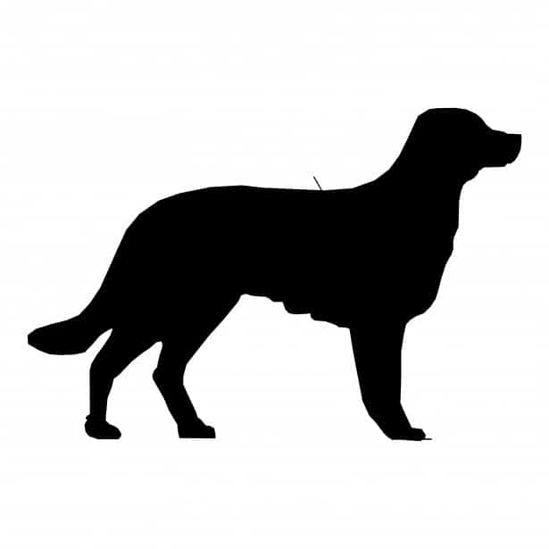 jual-anjing