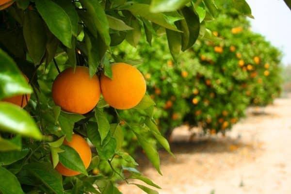 Bilakah Pohon Iman Berbuah Manis? (1)